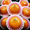 万能柑橘「清見」入荷!
